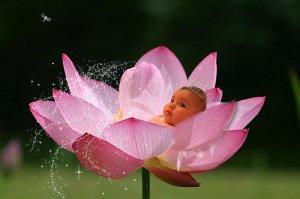 lotusbaby